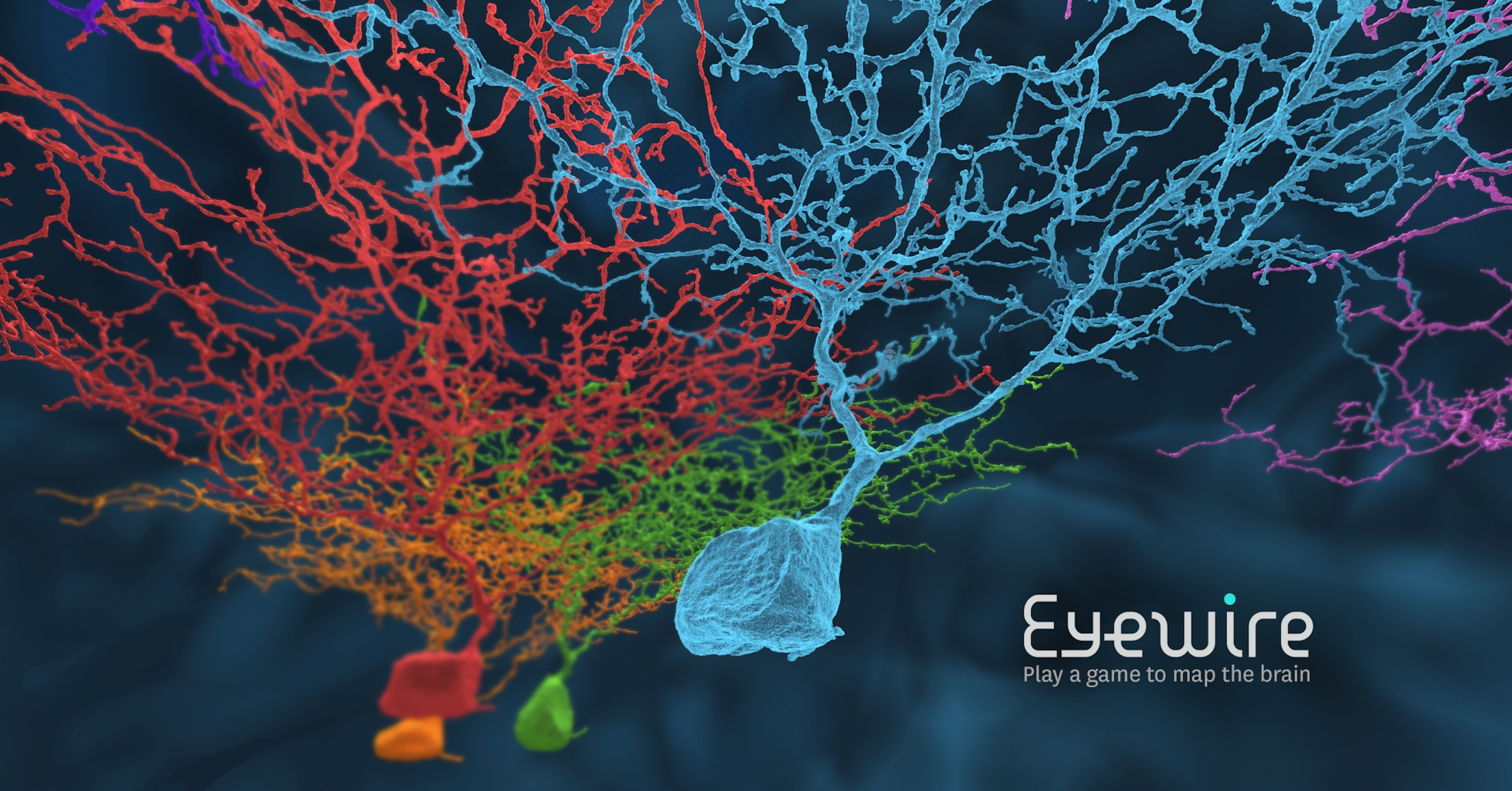 From data-driven illustrations to gamified neuron mapping